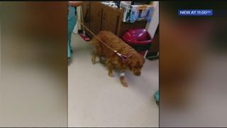 Paramedics revive dog with Narcan