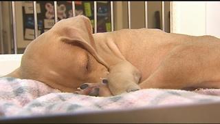 Local Petland taking steps to keep pets, customers safe