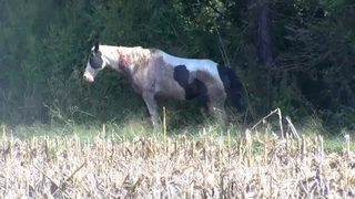 VIDEO: Horses found shot dead in a field