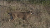 Hunters concerned with disease killing hundreds of Pa. deer