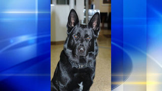 Latrobe K-9 officer passes away after battle with cancer