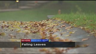 Heavy rain, gusty winds could bring beautiful fall leaves down