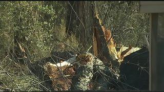 NWS confirms tornado struck Plum, Murrysville on Sunday