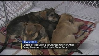 Rescued dogs, puppies available for adoption Friday