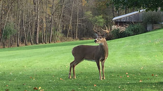 PA hunting licenses to go on sale June 17
