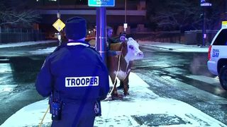 VIDEO: Cow escapes Nativity display twice in same night