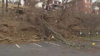 Landslide topples trees into Garfield parking lot