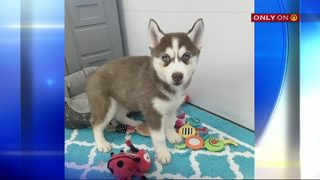 Woman scammed when trying to buy puppy