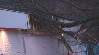 Trees collapse onto cars, businesses in Beechview