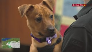 Police officer who rescued neglected puppy adopts her