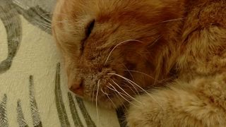 RAW VIDEO: Cat reunited with owner 14 years after hurricane