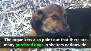 VIDEO: National Puppy Day