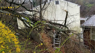 Home evacuated as landslide sends trees down hillside