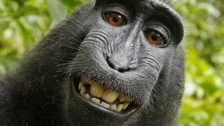 VIDEO: Monkey lawsuit over selfie