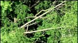 RAW: Tree falls on woman in Lawrence County