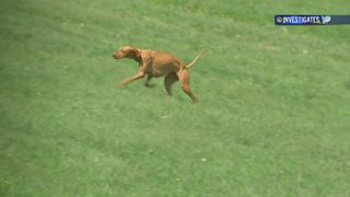 Protecting your pets from ticks, Lyme disease