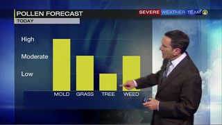 Pollen forecast for Monday