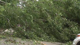 Large tree falls, blocks road in Washington County