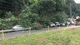 Traveling along route 51 Sawmill Run Blvd. some trees came down on top of some cars at a car lot near the Rite Aid at the route 88 intersection