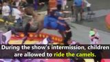 VIDEO: Camel bucks children at circus