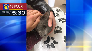Family shocked, angry after cat shot with arrow in Pittsburgh