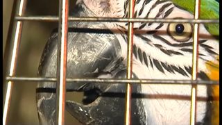 PHOTOS: Exotic animals removed from house in Macungie, PA