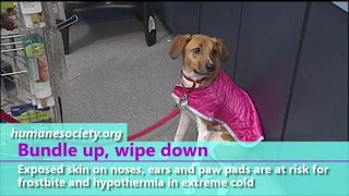 VIDEO: Keeping your pets safe this winter