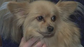 Coyote attack on dog leaves woman shaken