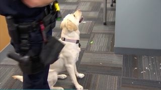 THURSDAY AT 5: Police dogs trained to find collections of child porn