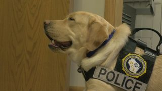 Police dogs trained to find collections of child porn