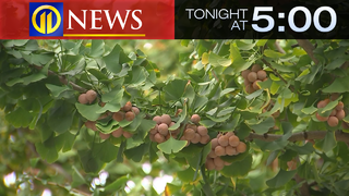 TONIGHT AT 5: Can Pittsburgh do more quell the putrid-smelling ginko trees?
