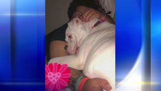 Father turns in daughter to face animal cruelty charges