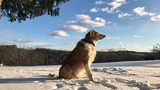 Scout in Leechburg  He loves the snow!