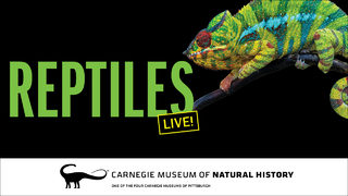 CONTEST CLOSED: Win 4-pack of tickets to Carnegie Museum of Natural History reptiles exhibit