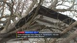 Tree crashes into home making it no longer structurally sound
