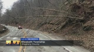 Fallen tree closes State Route 48