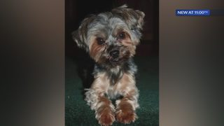 Dog killed, grandmother hurt when brutally attacked by neighbor