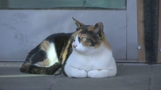 Cat adopts commuters at Israeli train station