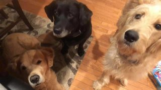 PHOTOS: Channel 11 viewers share pictures of their dogs