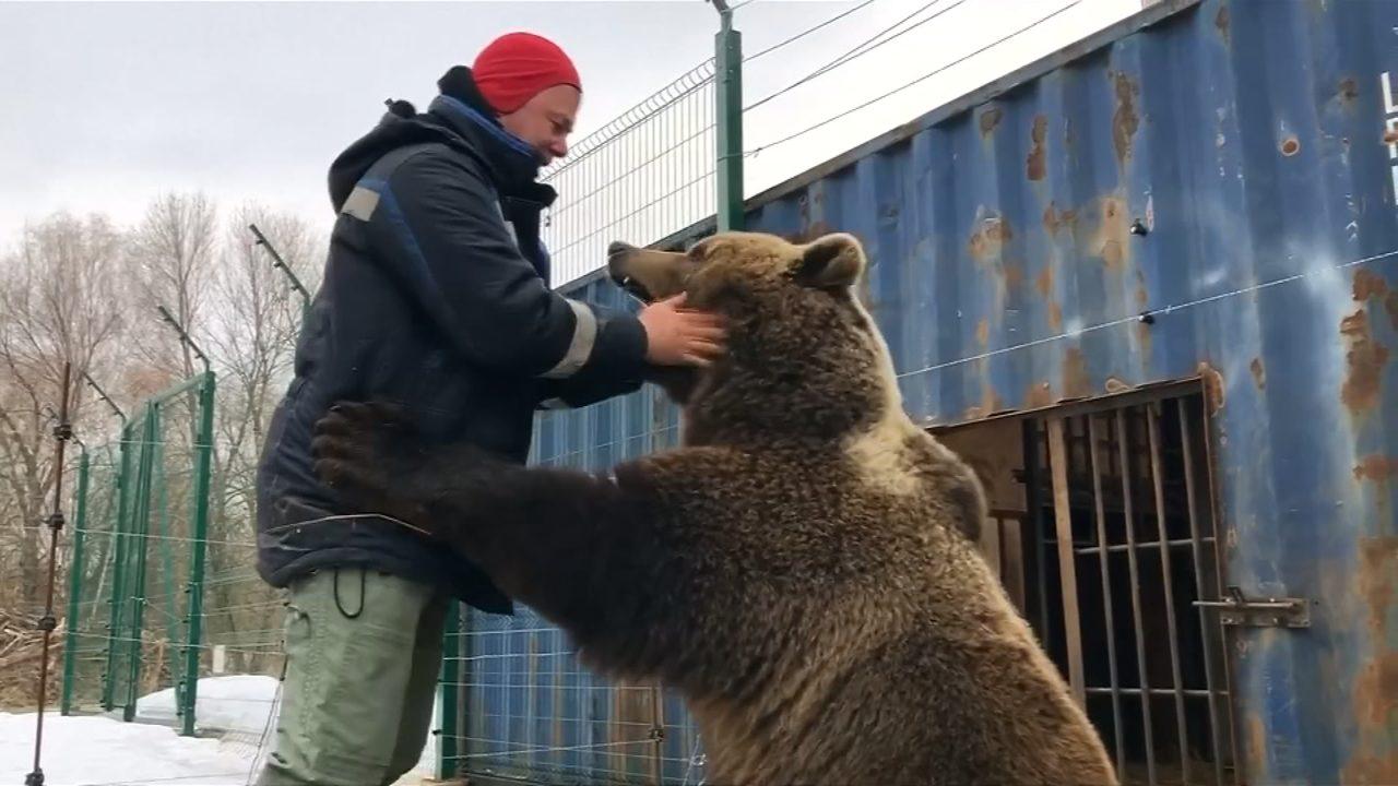 VIDEO__Russian_pilots_adopt_brown_bear_0
