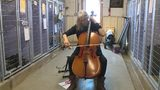 VIDEO: Cellist performs for shelter animals