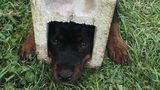 VIDEO: Dog stuck in cinder block