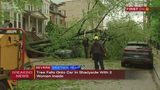 Massive tree falls on car with women inside