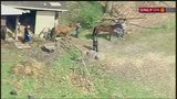 Horses removed from property in McCandless after abuse reports