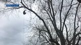 VIDEO: Man gets stuck in tree chasing drone