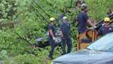 Massive tree crashes down across street, lands on cars