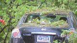 RAW VIDEO: Squirrel Hill tree blocking Shady Ave