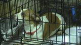 Nearly 50 dogs rescued from local home