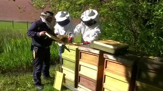 Inmates learn beekeeping skills