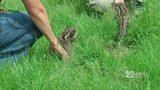 RAW VIDEO: Leopard cub makes new friend